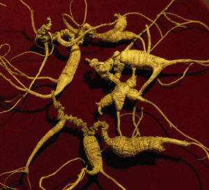 Ginseng is a fast way to boost immune system
