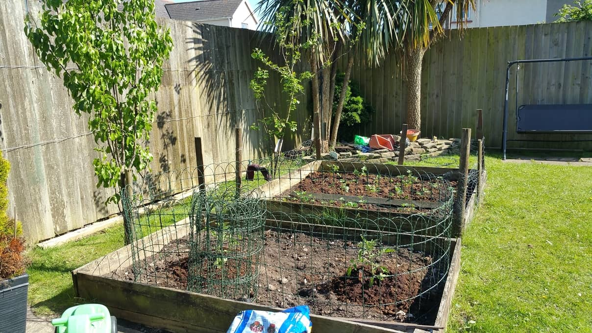 fruit trees and veggies